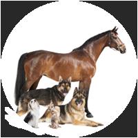 modern-dog-blog